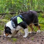 Å la hunden få bruke nesen og finne ting er en fornuftig måte å aktivisere hunden på.