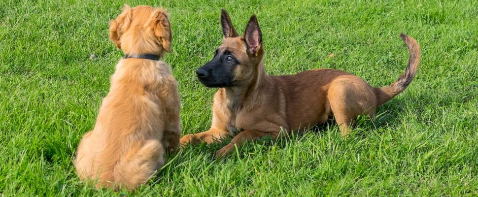 Leia & Amie-1
