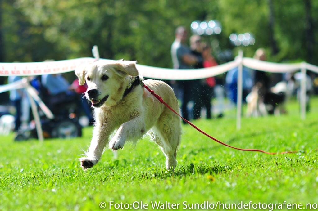 Sandvika Byfesthund