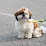 cute-dog-956936_1920