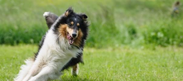 dog-818064_1920
