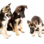 dogs-1304460_1920