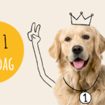 DOGS_Facebook_470x246px3