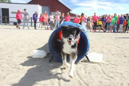 Agility intro weekendkurs